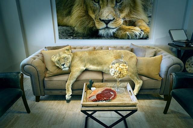 leo resting